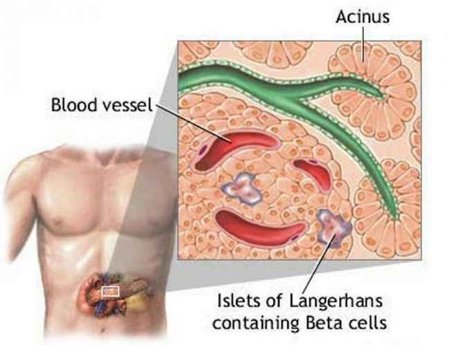 очищение кишечника и печени от паразитов