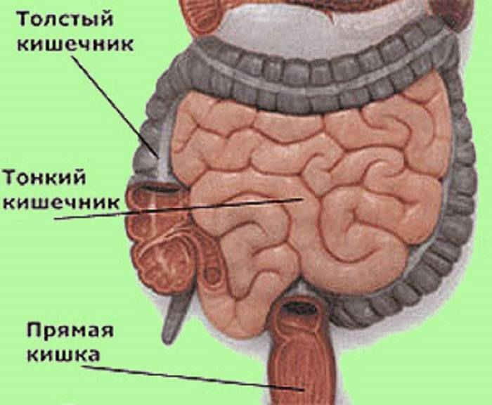 заболевания кишечника запах изо рта